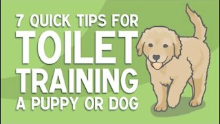 7 QUICK TIPS FOR TOILET TRAINING YOUR DOG