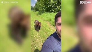 Un ours poursuit un homme pour de la glace
