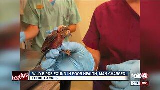 Illegal birds found in Lehigh Acres home