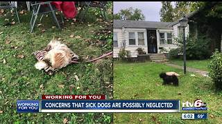 Neighbors concerned about two possibly neglected dogs in Kokomo