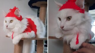 Kitty reluctantly shows off knitted cat hat
