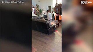 Cães cantam os parabéns à avó da dona
