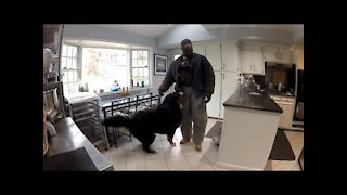 This Fake Burglar Break Into Home To See How Dogs Will React