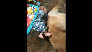 Baby plays peek-a-boo with doggy tail