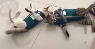 Gatti odiano indossare vestiti