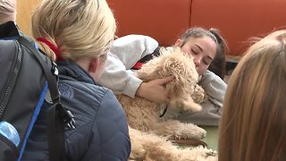 Puppy love program helps Boise State students relax during finals week