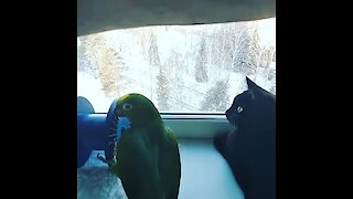 Cat & parrot spend some quality time together