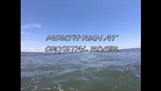 Mouth Run at Crystal River (2020)