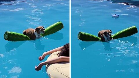 Dog hangs on pool floatie just like a human