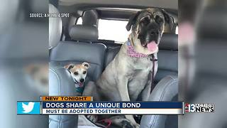 Unique bonded pair of dogs need a forever home