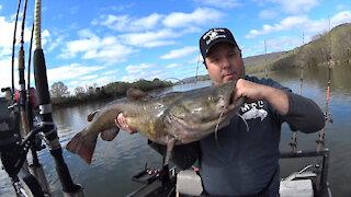 Giant Spring Flathead Catfish!!!