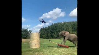 What a wonderful throw, human-elephant collaboration