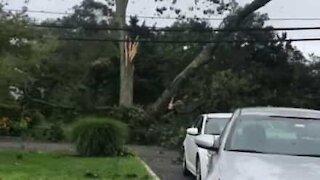 Fierce storm sends tree crashing down onto power lines