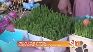 Animal Grass Organic offers living, pet friendly easter baskets