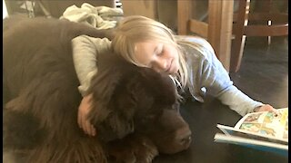 Little girl sweetly reads with her giant Newfoundland dog