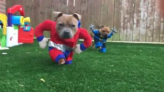 O mundo é um lugar seguro quando existem super cães!