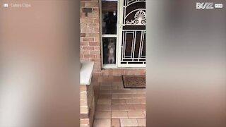 Quando il cane fa delle smorfie buffissime alla finestra
