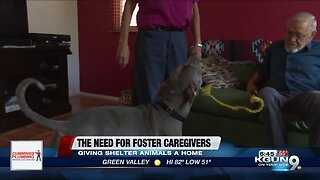 Fostering a shelter animal, an inside look