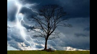 Lightning strikes tree and causes accident