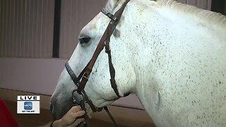 HELP HORSES HELP PEOPLE WALKATHON