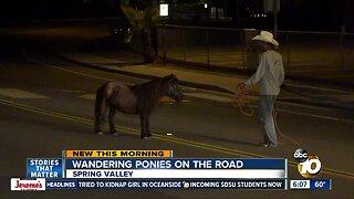 Ponies wander onto Spring Valley street