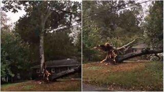 Tree destroys home in North Carolina