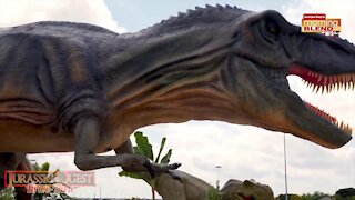 Jurassic Quest coming to Tropicana Field  Morning Blend