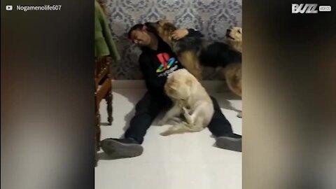 Homem volta a ver os seus cães após 6 meses!