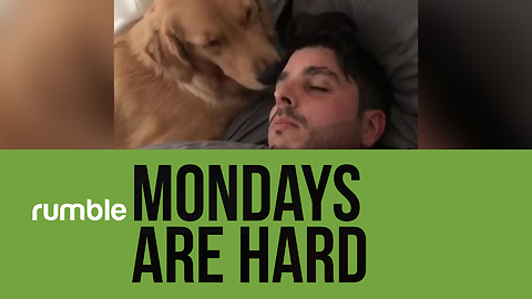 """Mondays are """"ruff"""" in this hilarious doggy-filled compilation!"""