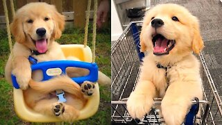 Baby Dogs Cute and Funny Videos Compilation