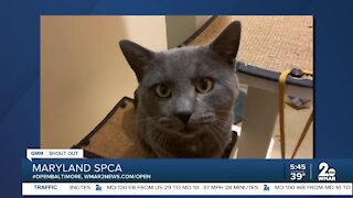 Pets up for adoption at the Maryland SPCA