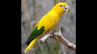cute lovely parrot