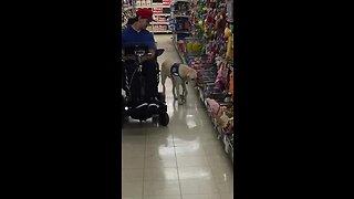 Viral video of service dog Toli