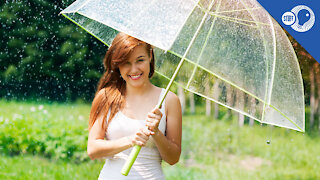 Stuff of Genius: Better, Faster, Stronger... Meet the Modern Umbrella
