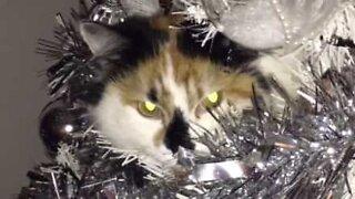 Gatto si rilassa sull'albero di Natale