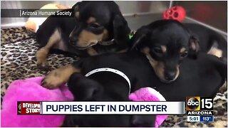 Five puppies abandoned in a duffel bag inside Phoenix dumpster