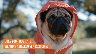 Does your dog hate wearing a Halloween costume?