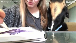 Pet dog craves attention from owner trying to work