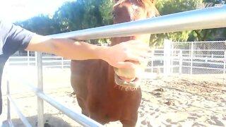 Hest elsker at blive aet