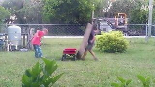 Backyard Fails