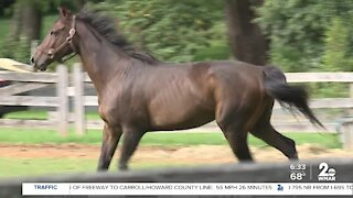 Two horses shot and killed at farm