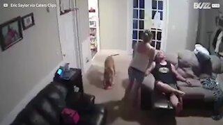Dog unintentionally pulls off amazing basketball trick shot