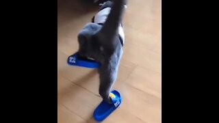 The Funniest pets compilation