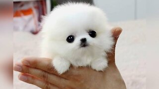 Smallest Dogs In The World 😱😍💘