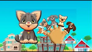 Cute Cat and Dogs Daddy Finger Family Song Cat and Dog Nursery Rhymes Cookie Tv Video