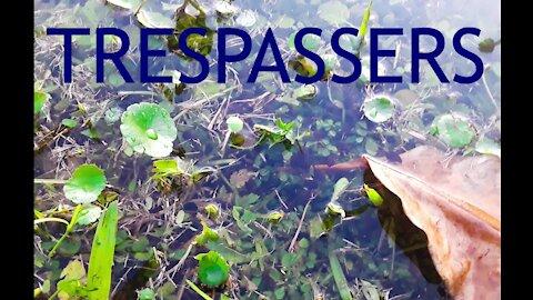 Skipper Knows the Trespassers!