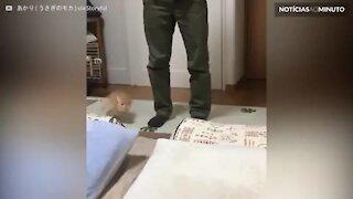 Coelho faz sua rotina de exercícios matinais!