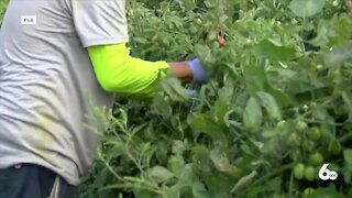 Local organization collecting donations to support Idaho farmworkers amid extreme heat