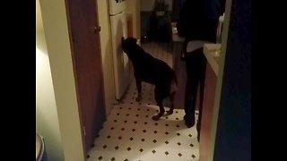 Dog Tries to Break into Fridge