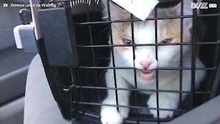 Cat's hilarious facial expression in carrier